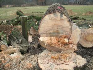 Hier liege ich nun, ist mein Holz etwa morsch ?